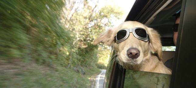 como-deshacerse-del-olor-a-perro-del-coche